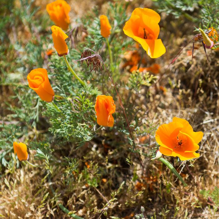 Wildflowers-4