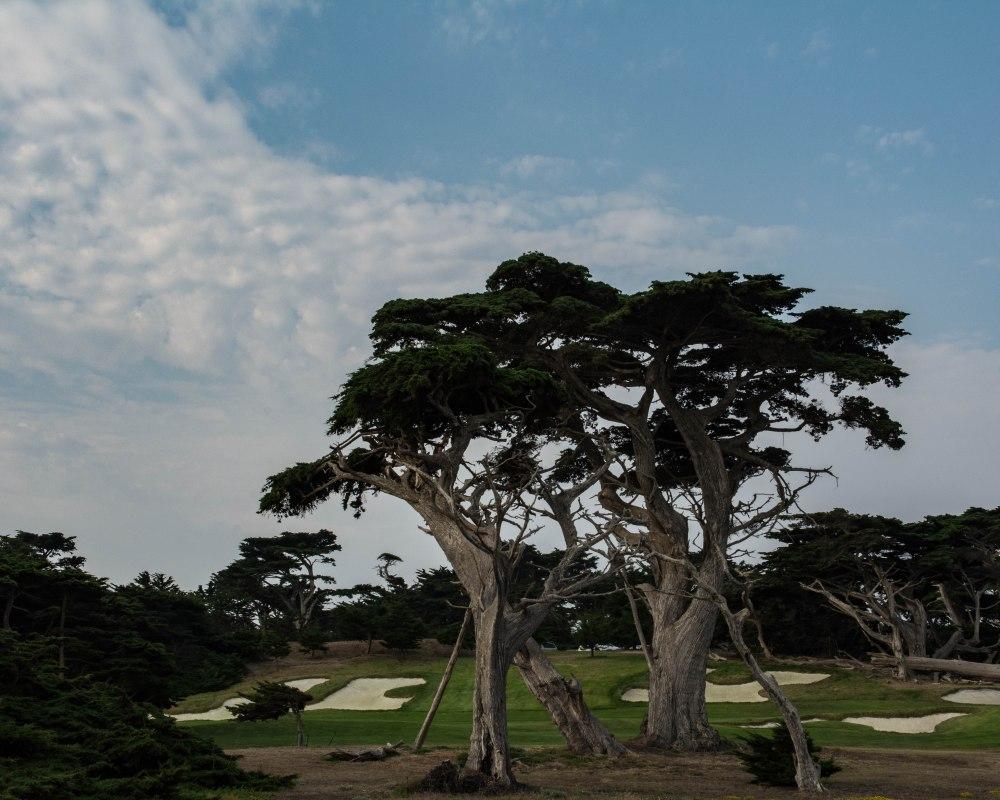 Monterey-13