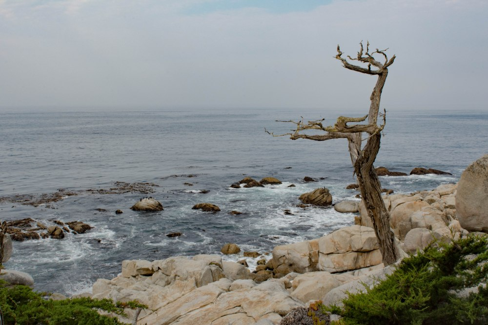 Monterey-18