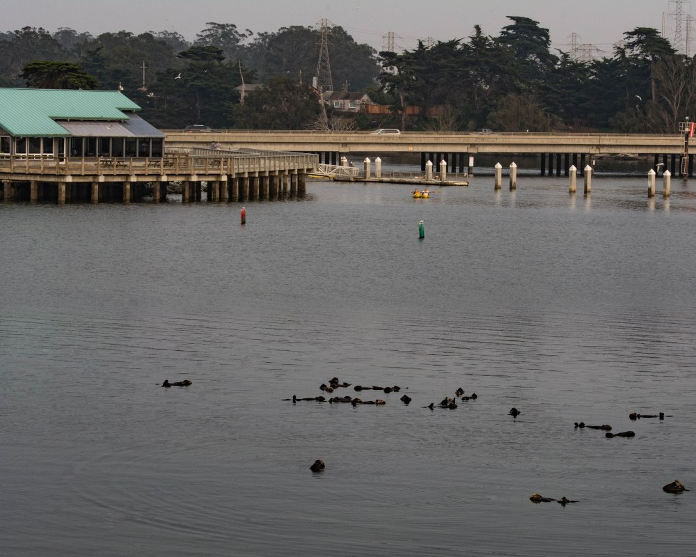 Monterey-27