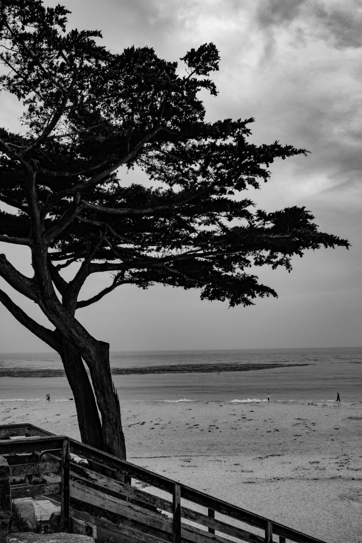 Monterey-30