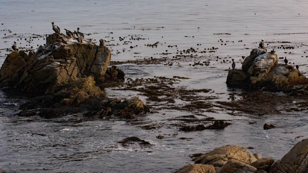 Monterey-9