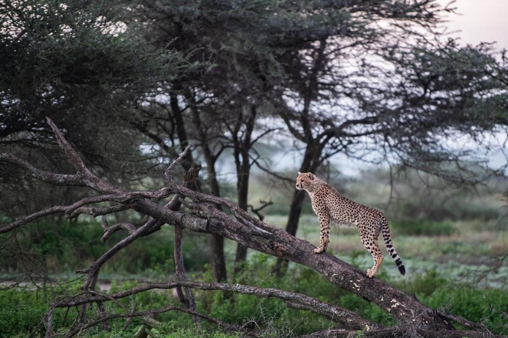 Tanzania-10002