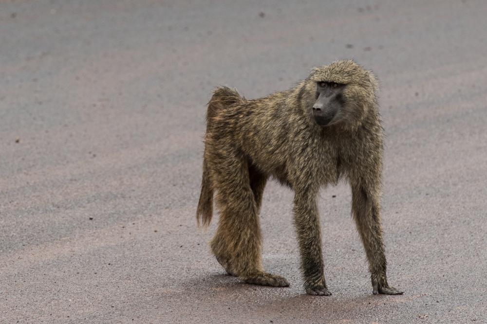 Tanzania-3012