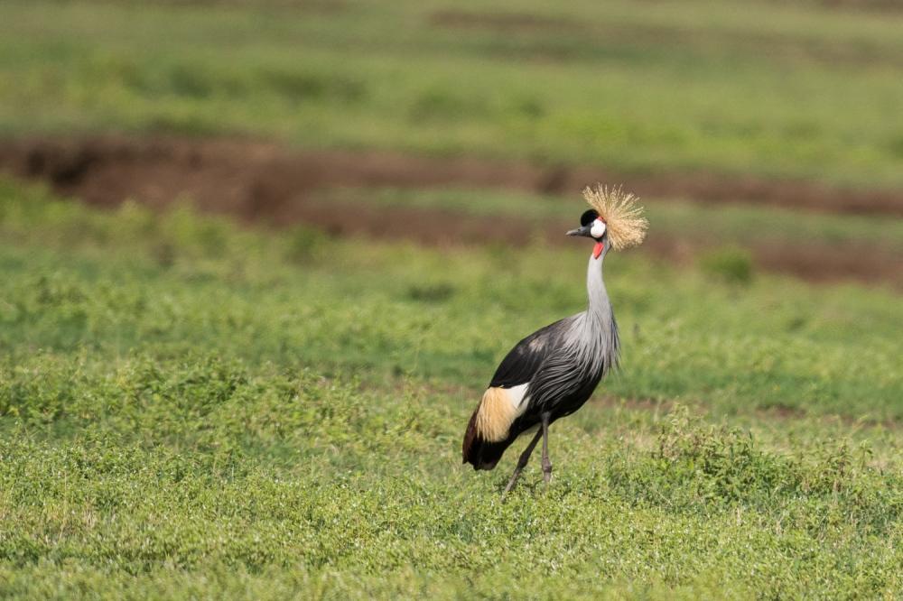 Tanzania-5011