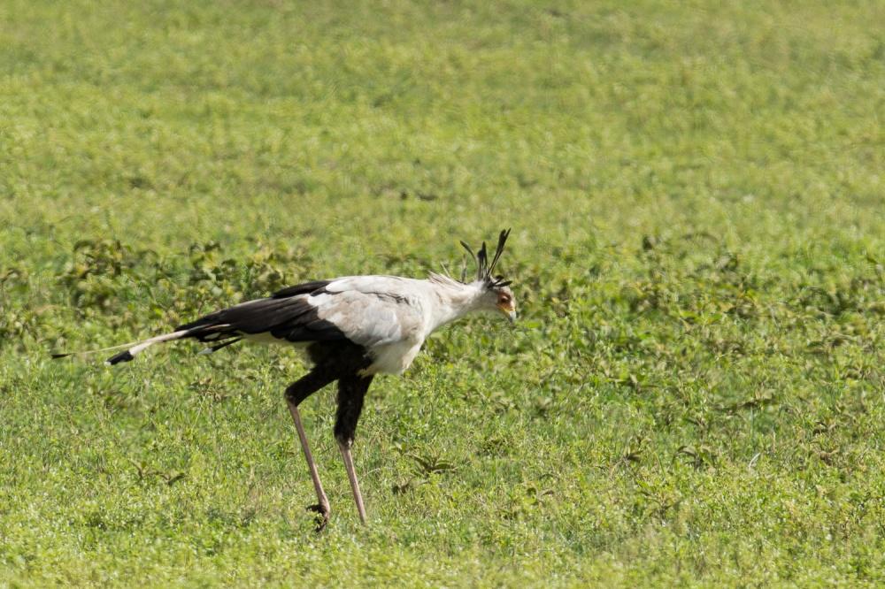 Tanzania-5017