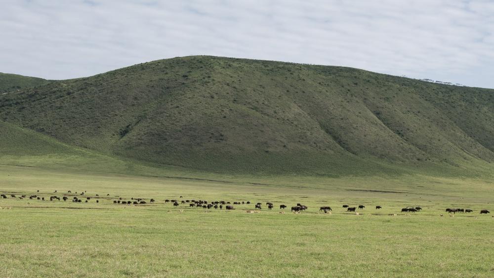 Tanzania-5022