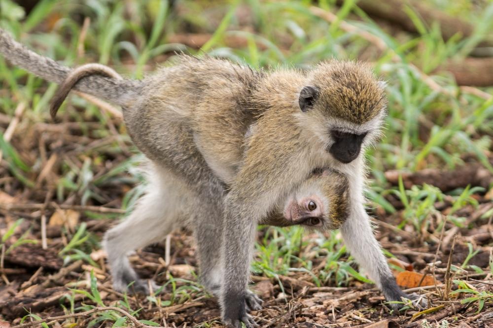 Tanzania-5039