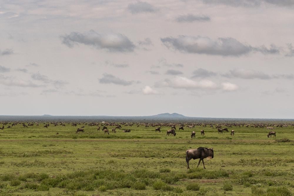 Tanzania-6001