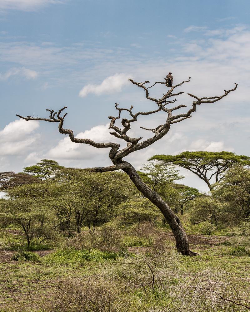 Tanzania-6009
