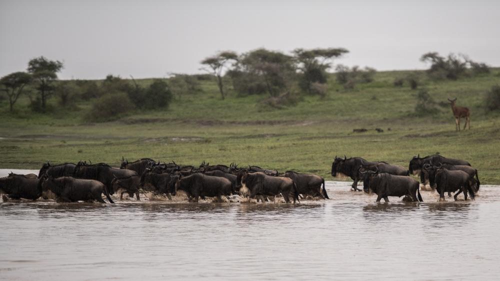 Tanzania-6011