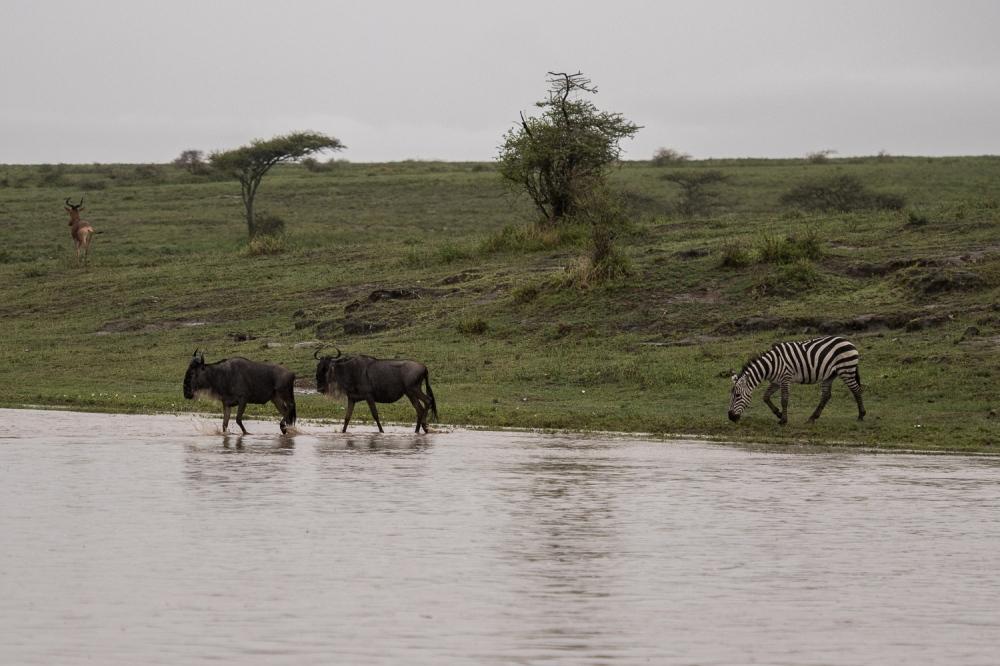 Tanzania-6012