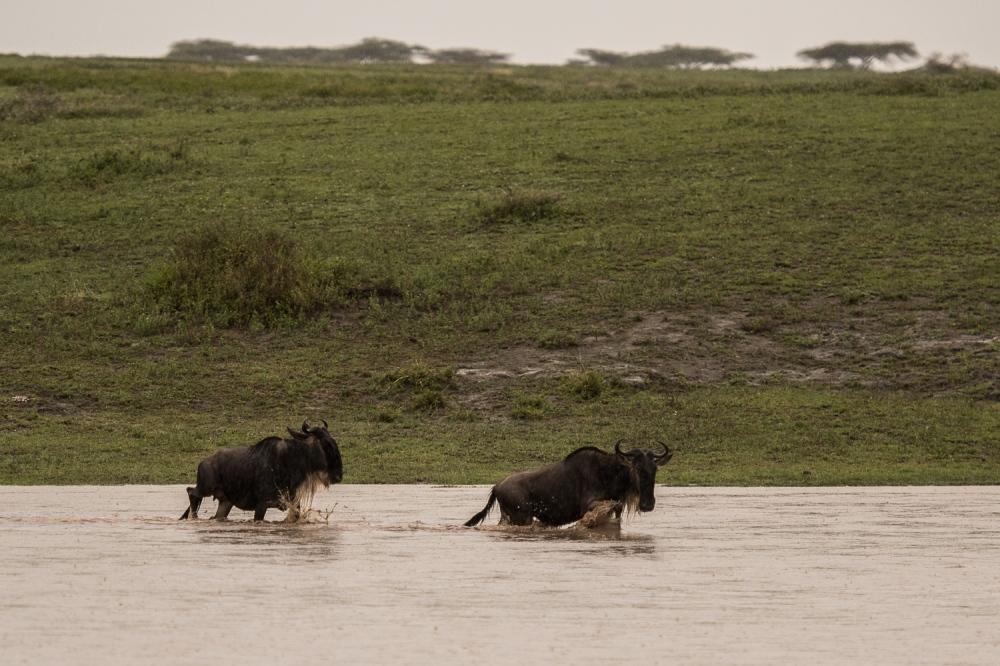 Tanzania-6013