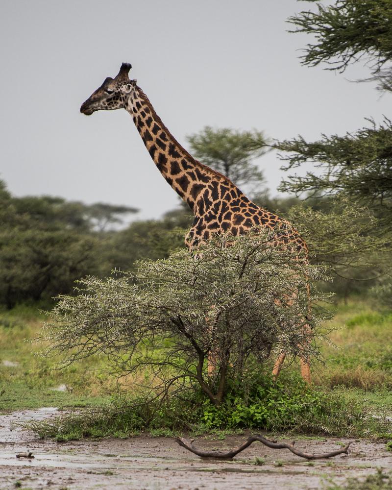 Tanzania-6015