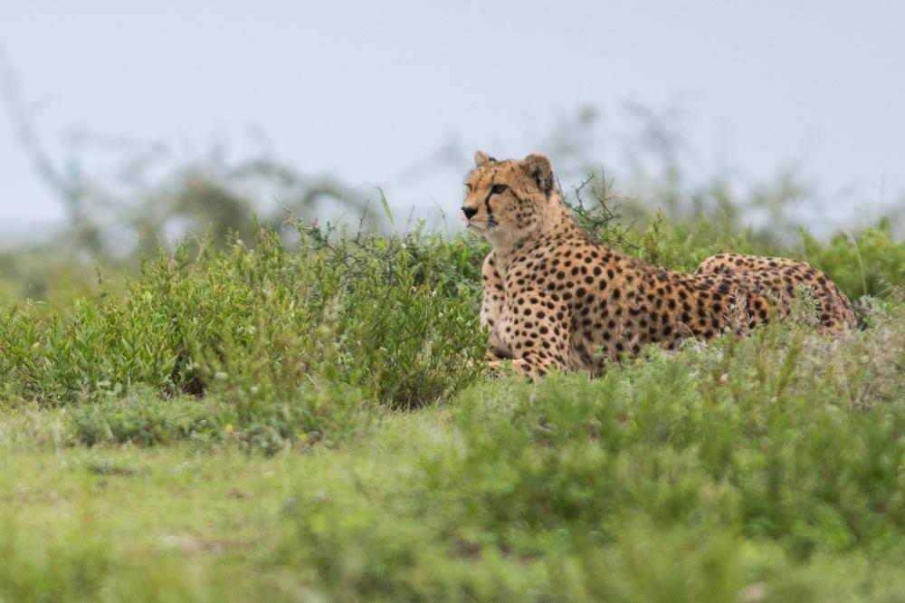 Tanzania-7002