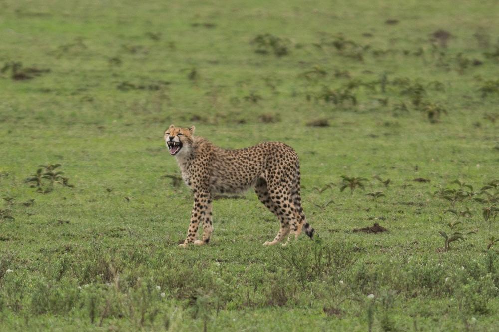 Tanzania-7009