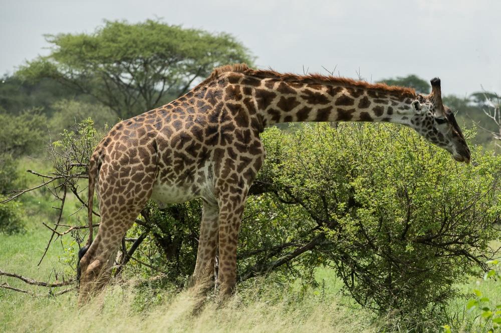 Tanzania-8010